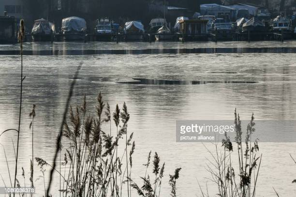 A thin layer of ice has formed on parts of the Rummelsburger Bucht In the next days minus temperatures are expected in the night Photo Jens...