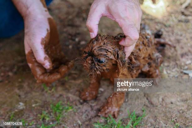 A dog puppy is covered with mud after the break of a dam at the Feijão iron ore mine Photo Rodney Costa/dpa