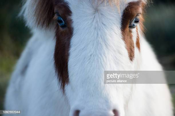31 January 2019 MecklenburgWestern Pomerania Barth A horse grazes in a rural idyll on the pasture of Barth Youth Hostel The youth hostel is to be...