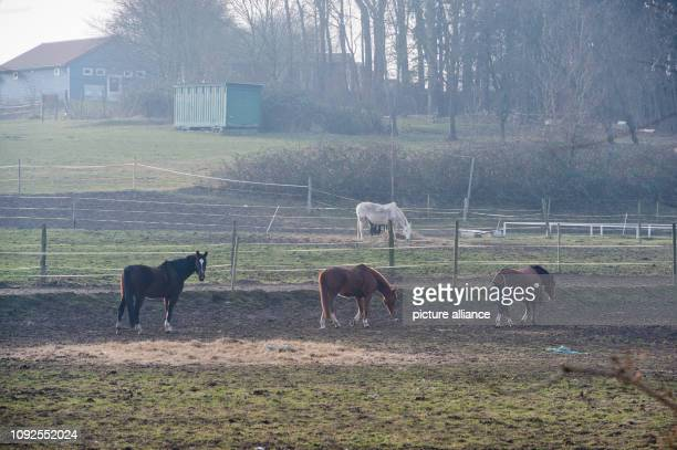 31 January 2019 MecklenburgWestern Pomerania Barth Horses graze in a pasture at Barth Youth Hostel The youth hostel is to be closed at the end of the...