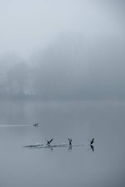 DEU: Misty Weather Near Cologne