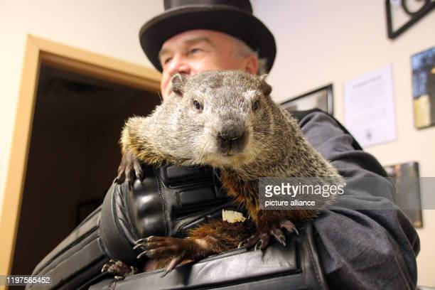 Groundhog Phil on the arm of his master John Griffiths Every year in February in a patch of forest near Punxsutawney the marmot makes a forecast for...