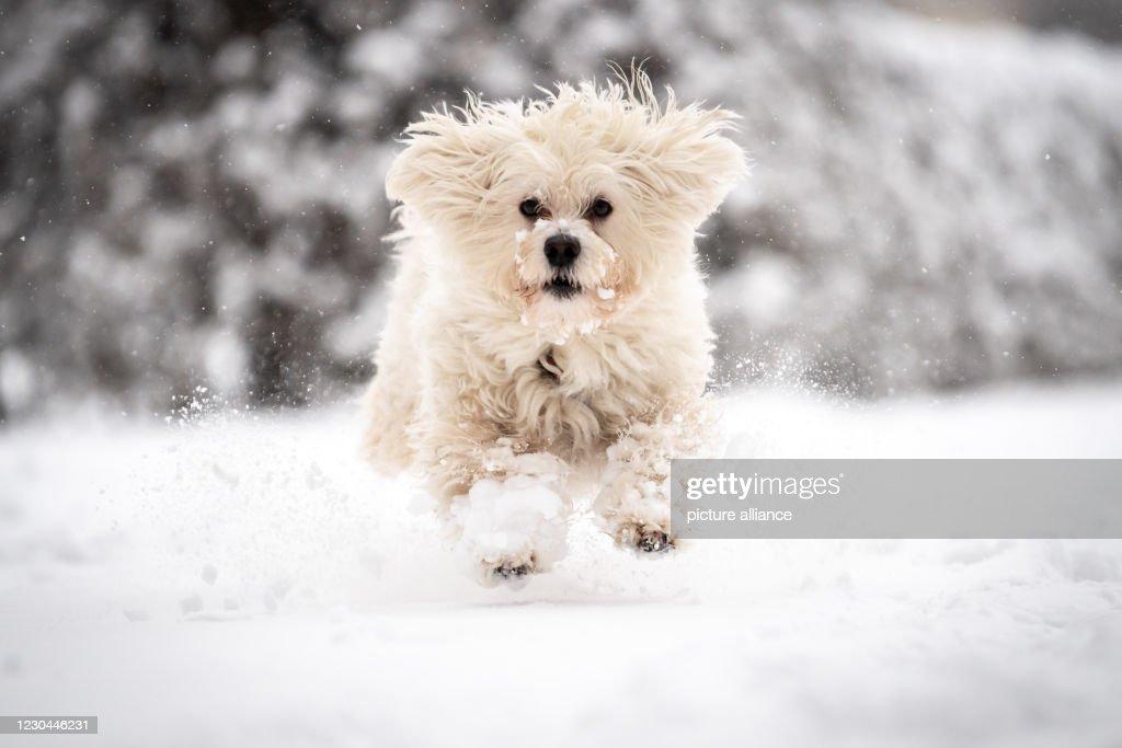 Snow in Munich : News Photo