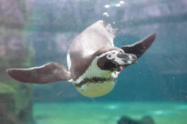DEU: Inventory Dresden Zoo