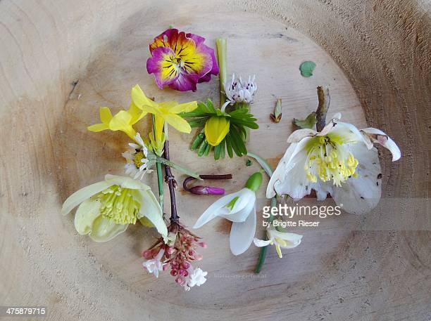January Flowers 2012