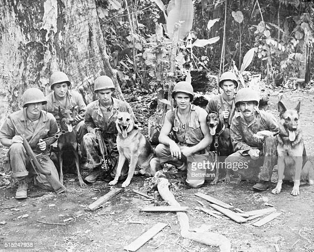 Jap Killing Teams on Bougainville Bougainville Island Marines and their devil dog partners stand by in a Bougainville Jungle clearing as they await...