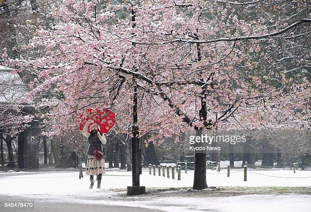 TOKYO Japan A woman takes a photograph of cherry blossoms covered by snow at Inokashira Park in Tokyo on March 7 2011