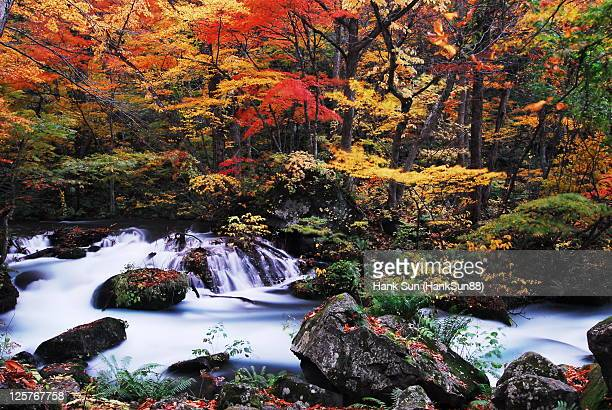 Japan aomori oirase maple leaves