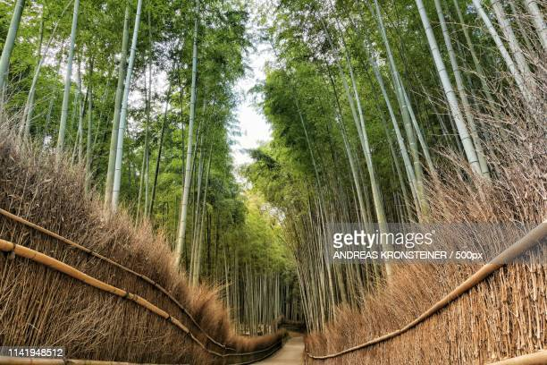 japan autumn impression - andreas solar stock pictures, royalty-free photos & images