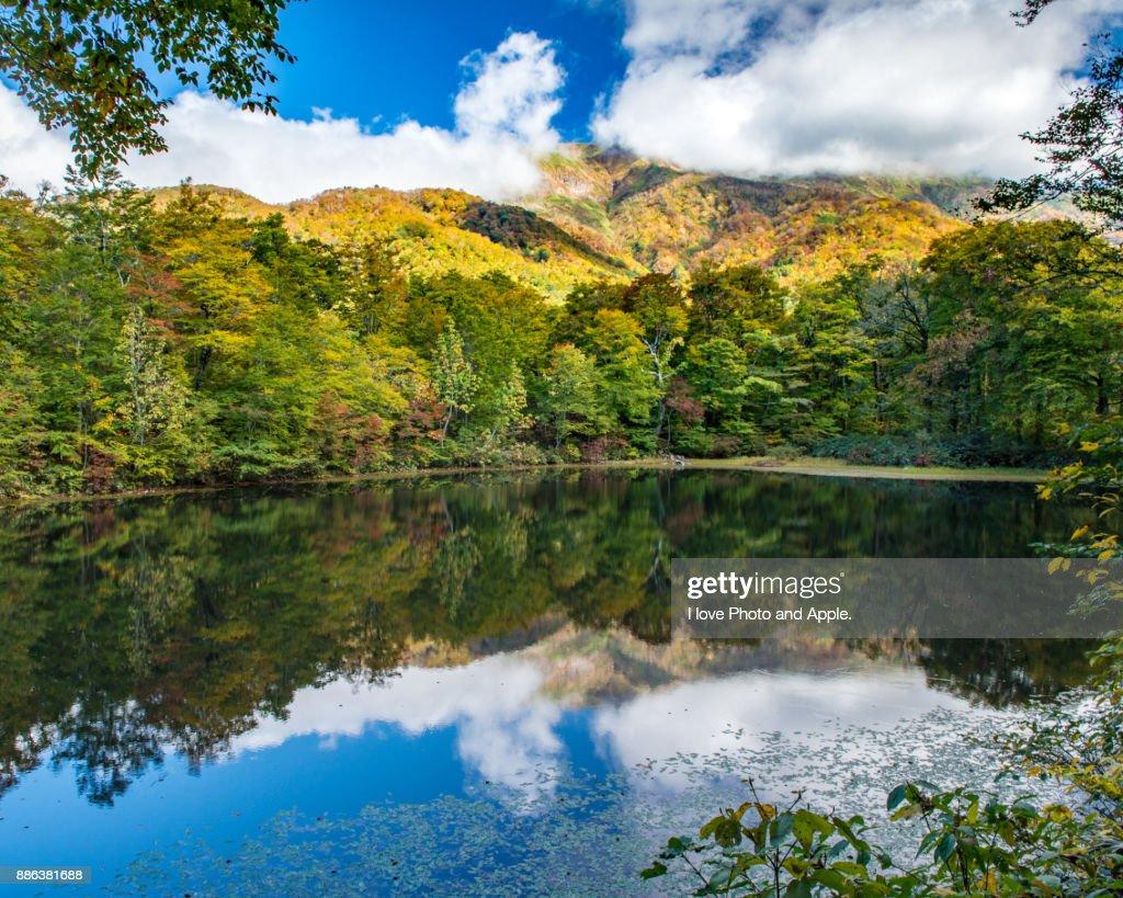Japan autumn scenery : Foto de stock