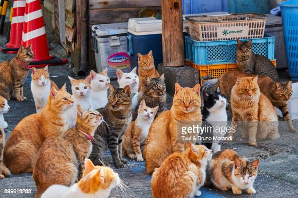 japan, cat island, aoshima island - large group of animals stock pictures, royalty-free photos & images