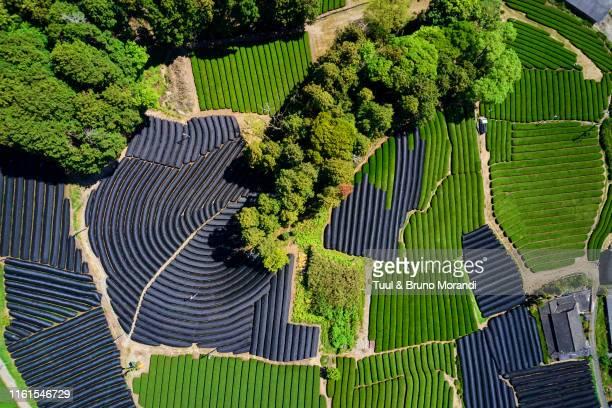 japan, honshu island, kansai region, uji, tea field - landelement stockfoto's en -beelden