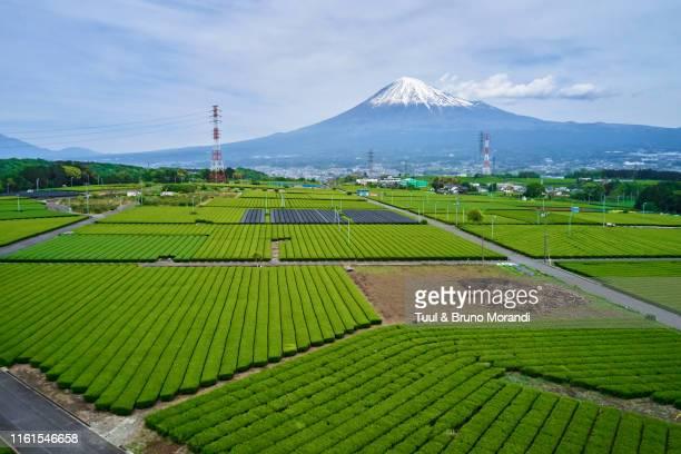 japan, honshu, shizuoka, tea fields and mount fuji - shizuoka stock pictures, royalty-free photos & images