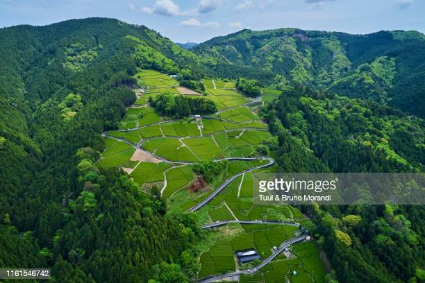 japan, honshu, shizuoka, tea fields - 静岡県 ストックフォトと画像