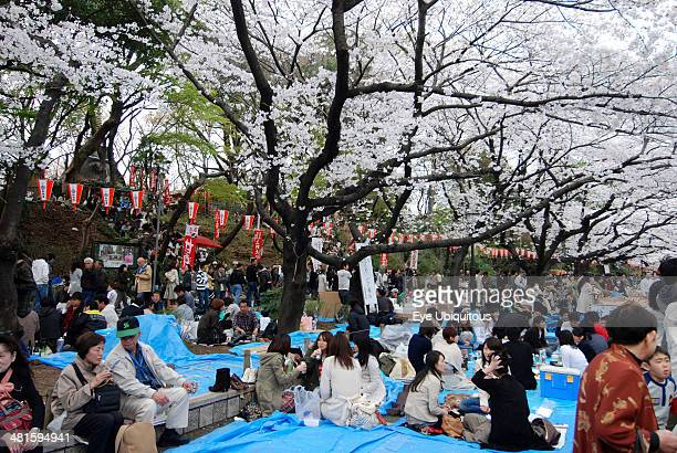 Japan Honshu Tokyo Ueno Park Hanami flower viewing parties under the cherry blossoms