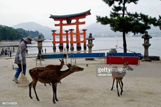 Japan / Insel Miyajima / Eines der meist fotografiertesten Objekte in Japan ist wohl das berühmte große Torji vor dem IsukushimaSchrein auf der Insel...
