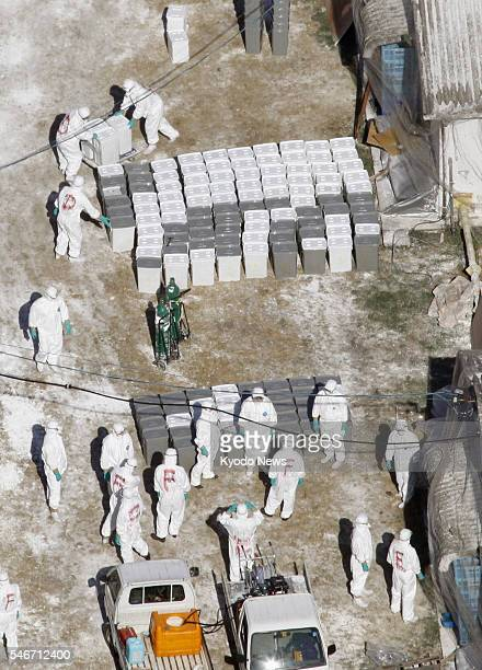Japan - Inspectors in protective gear transport containers with culled chickens at a poultry farm in the city of Miyazaki on Jan. 22 after an...