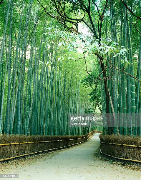 Japan, Kyoto Prefecture, Ukyo Ward, Sagano, bamboo bordered path