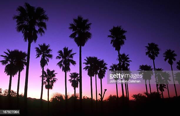 Japan, Kyushu, Miyazaki, sunset with fan palms.