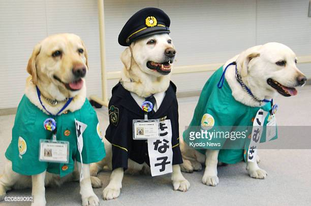 Japan - Labrador retriever Kinako in a police uniform-like costume poses with her daughters Komugi and Mirin at the Kagawa prefectural police...
