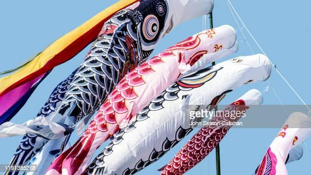 japan, miyazaki, carp flags for children's day - 鯉のぼり ストックフォトと画像