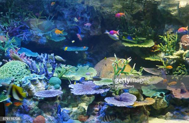 TOKYO Japan Photo shows a tank recreating the environment of the Great Barrier Reef in Australia at Sunshine Aquarium located on the roof of a...