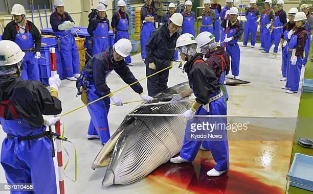 ISHINOMAKI Japan Researchers examine a minke whale at Ayukawa port in the northeastern Japanese city of Ishinomaki Miyagi Prefecture on April 26...