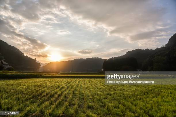 Japan rice paddy field in the morning sunrise , kyushu , japan