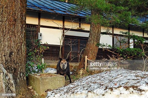 Japan Takayama Soyuji Temple unknown visitor came from the forest