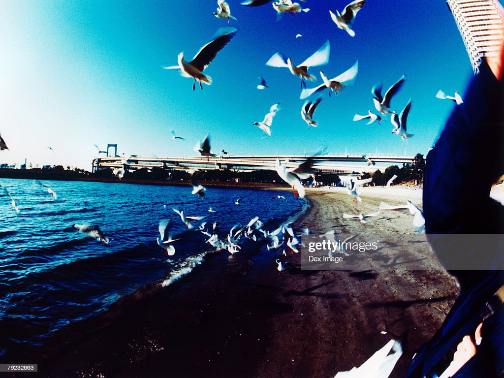 Japan, Tokyo Bay skyline, Seagulls flying : Stock Photo