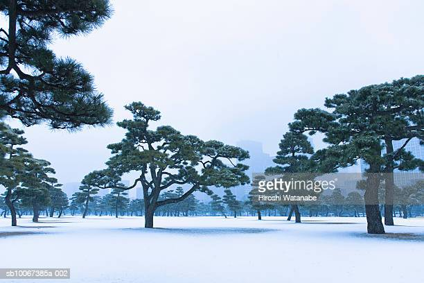 Japan, Tokyo, Chiyoda-ku, Imperial Palace grounds in summer