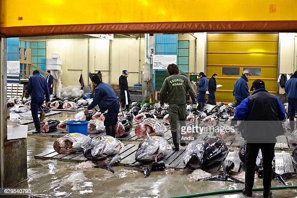 Japan Tokyo tuna auction hall Tsukiji market Auctioneers and wholesalers inspecting the goods before the auction