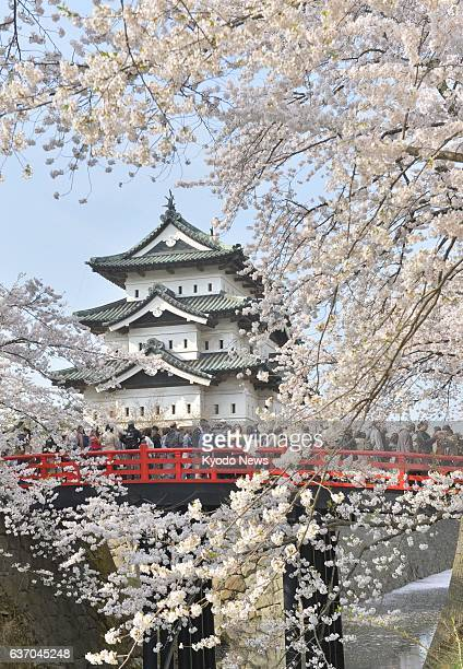 HIROSAKI Japan Visitors look at cherry blossoms in full bloom at Hirosaki Park in Hirosaki Aomori Prefecture on April 28 before the start of a 10year...