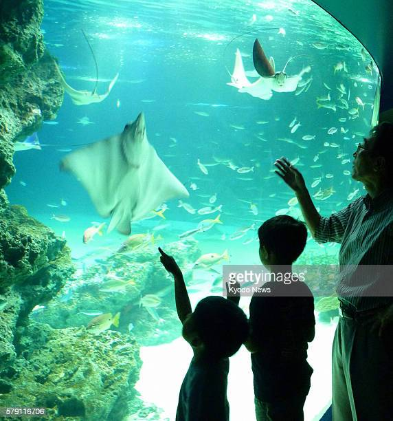 TOKYO Japan Visitors look at rays and fish swimming in the Sunshine Lagoon tank on the first floor of Sunshine Aquarium located on the roof of a...