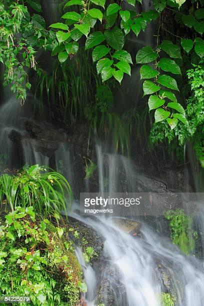 Japan, Wakayama Prefecture, Waterfall with flora, close-up