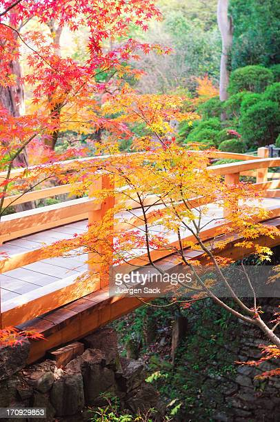 Japanese Autumn Bridge