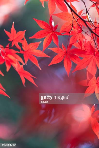 Japanische Herbst Farben