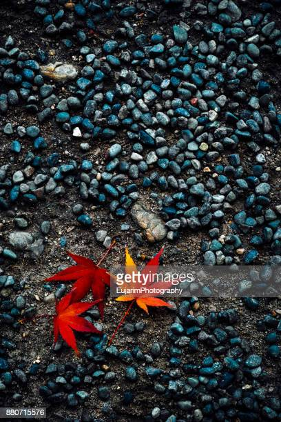 Japanese autumn foliage concept with three red maple leaves on stony road