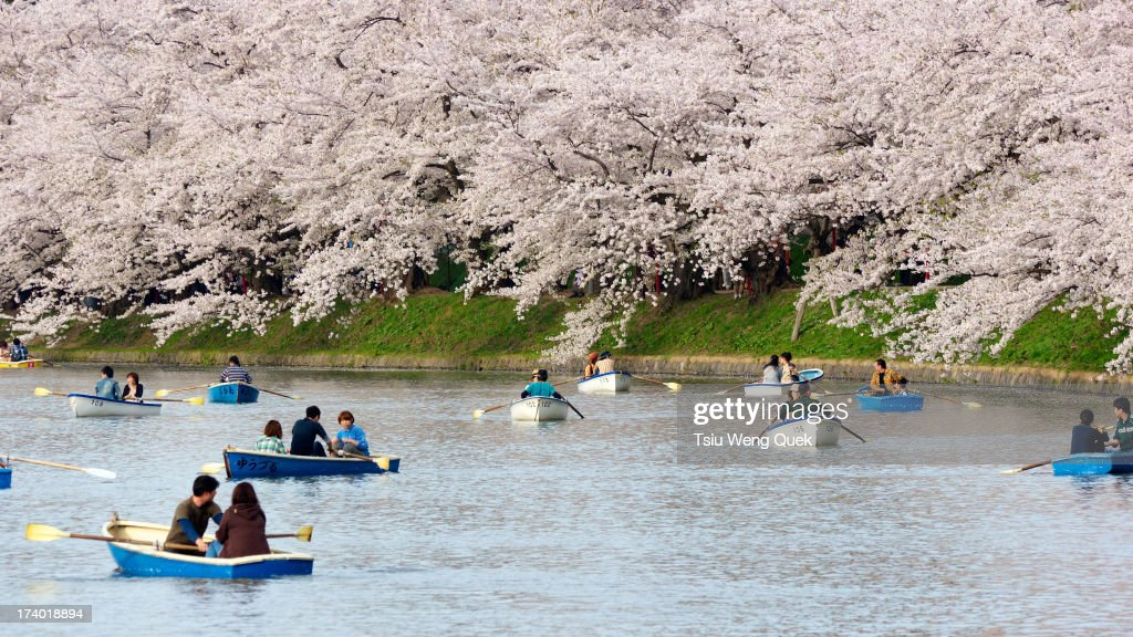 Boaters at Hirosaki Castle Moat for Hanami : News Photo