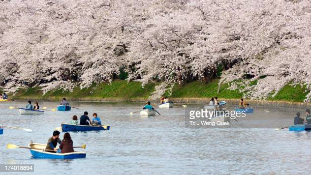 Japanese boaters at Hirosaki Castle Park Moat during cherry blossom viewing season in spring. Hirosaki Castle is located at Aomori Prefecture in the...