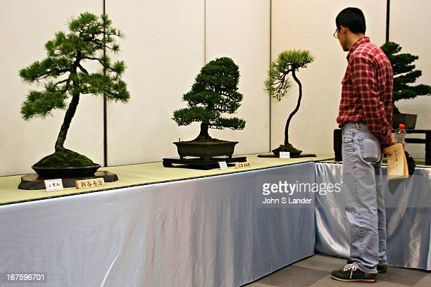 Japanese bonsai developed its localization of techniques and aesthetics after its introduction to Japan by imperial embassies returning from China in...