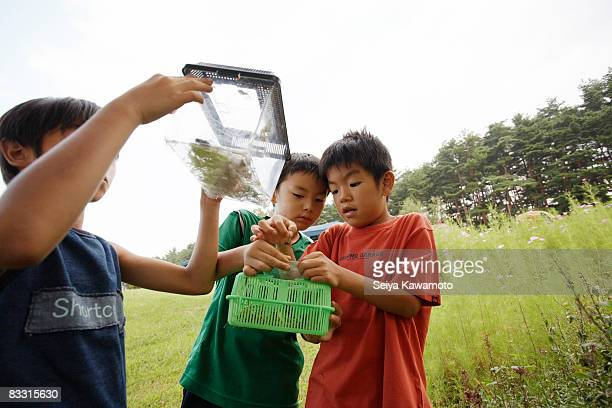 Japanese boys holding a plastic box with insects