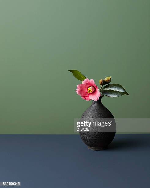 japanese camellia - vase stock pictures, royalty-free photos & images