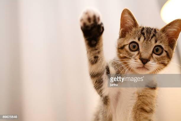 japanese cat  - winken stock-fotos und bilder
