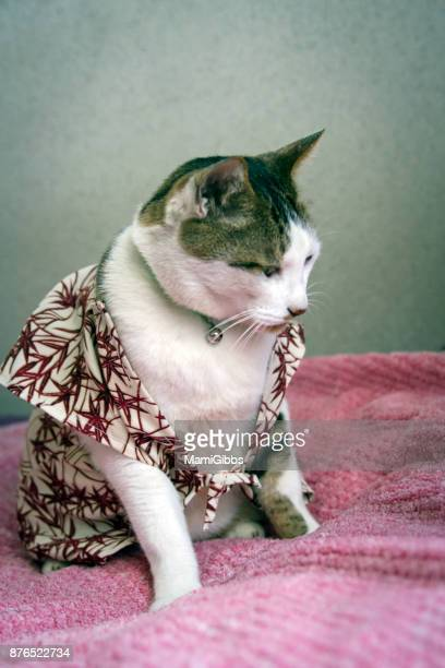 Japanese cat wearing KIMONO