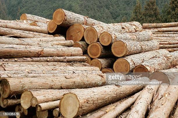 Japanese Cedar logs
