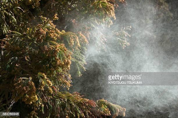 japanese cedar pollen - 花粉 ストックフォトと画像