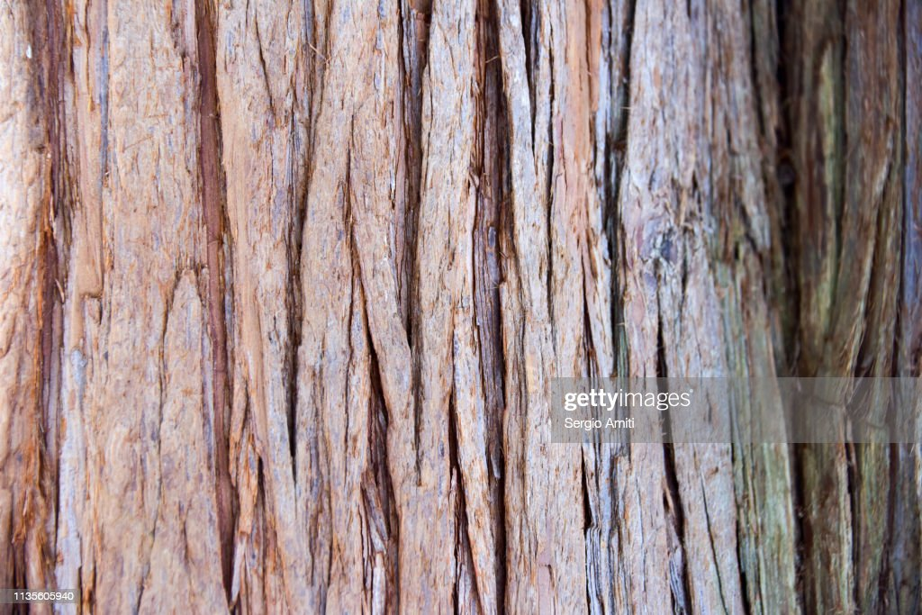 Japanese cedar tree bark : Stock Photo