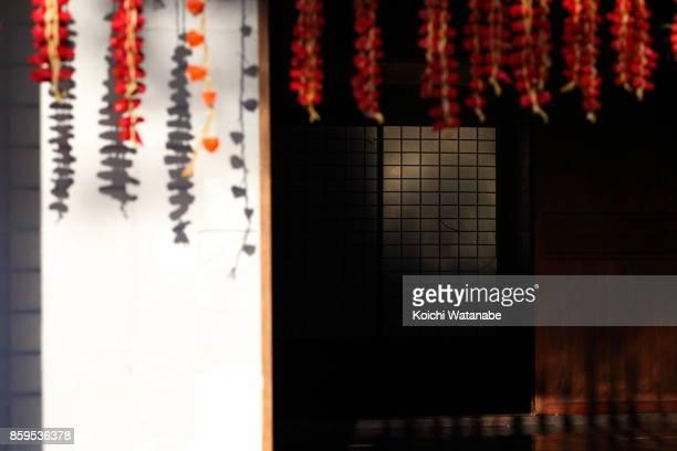 Japanese chili pepper