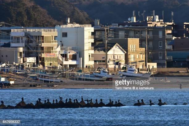 Japanese cormorant birds sitting on tetrapod